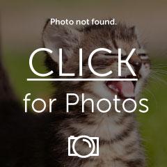 DSC04701Photoshop.jpg
