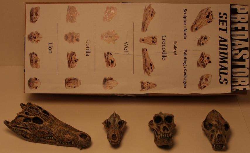 Narin_Predastore_Animal_skulls.JPG