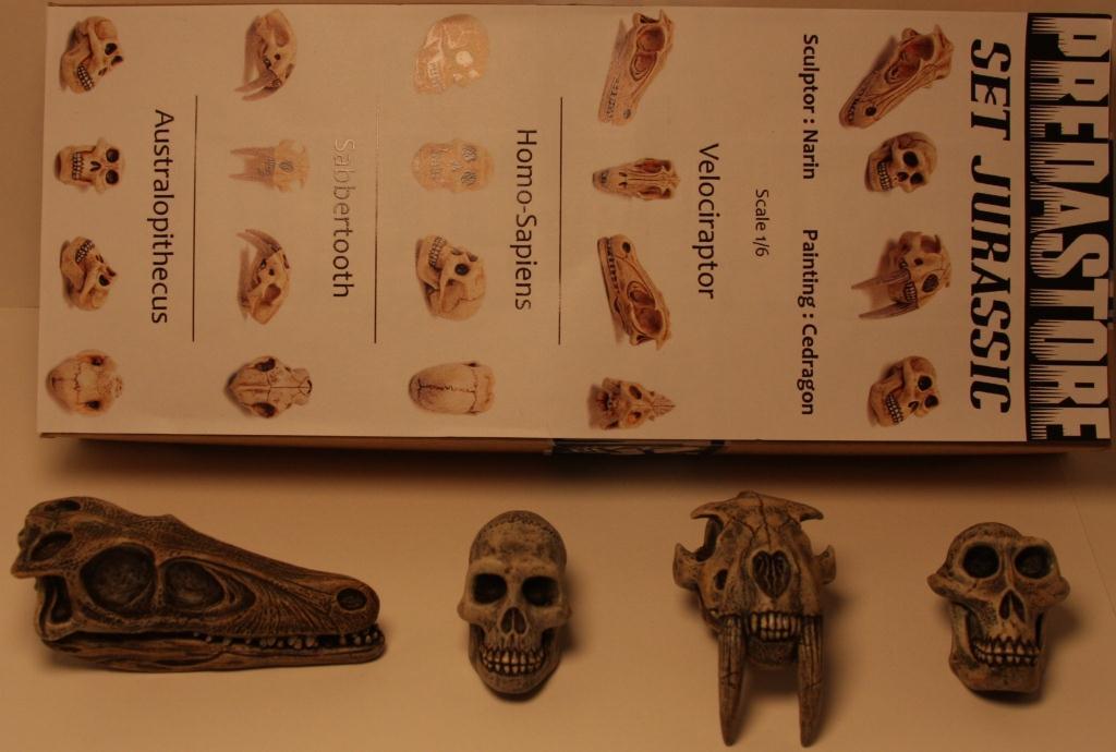Narin_Predastore_Jurassic_skulls.JPG