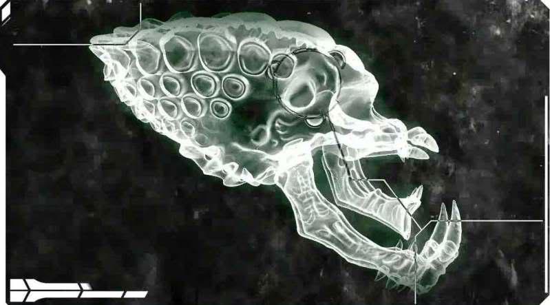 PredatorSkull.jpg
