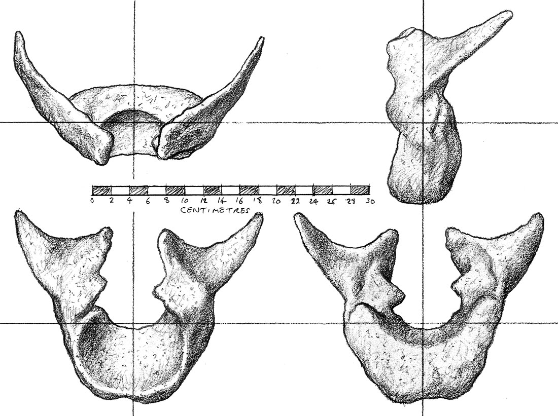 rex_atlas_drawing_by_strick67-dc8zatb.jpg