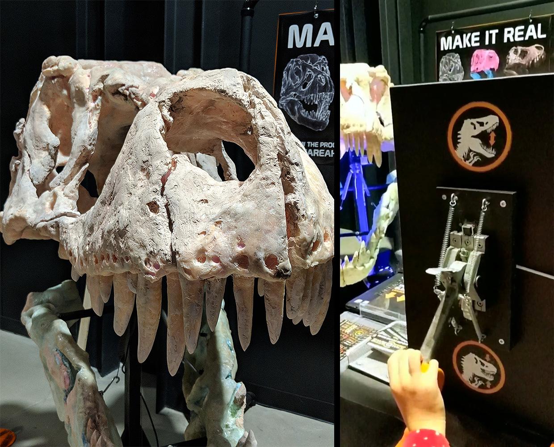 shareahack_trex-dinosaur-skull-makerfaire_002.jpg