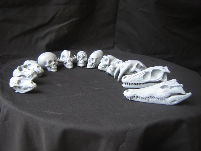 Skulls_set_001.jpg