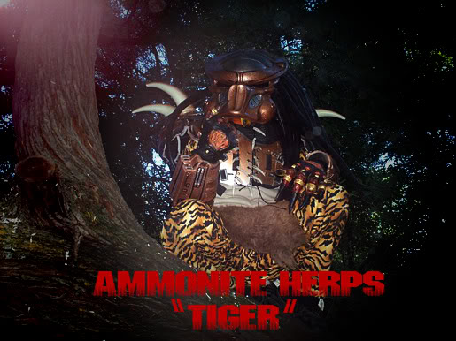Tiger_predator1.jpg
